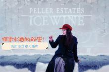 去尼亚加拉大瀑布探索冰酒的秘密 正如说到红酒就会提到法国,说到冰酒自然就会提到加拿大。 冰酒Icew