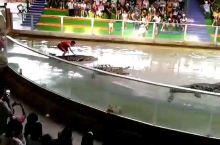 泰国 动物园看鳄鱼表演