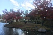 2019.11.19  D1,上午,奈良神鹿公园赏红叶,喂神鹿