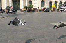 ——在东方小巴黎西贡遇见信鸽