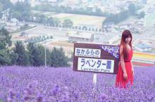 北海道中富良野的唯美浪漫之地||北星山町营薰衣草园,那一大片充斥眼球的紫色花海,有一丝神秘、有一丝伤