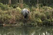 嘘独角犀牛,你看到了吗? #Chitwan