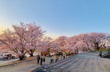 看了一天的樱花,鹤舞公园、名城公园,最成气候的还属宫川堤公园了~ 不同时段的樱花海,美到爆炸 躺在公