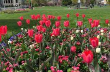 维多利亚的春天,姹紫嫣红