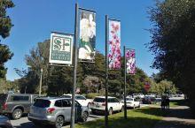 旧金山植物园 San francisco Botanical garden最值得学生物,园艺的来此打