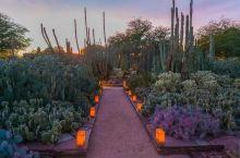 沙漠的植物很多品种,也算是科研形式的公园了,很好看的哦