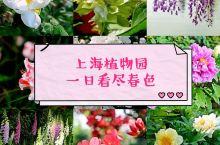 春天,找一个赏花的妙处! 一年四季赏花,都不能漏掉上海植物园。 四月中旬,来得晚了一些,樱花和桃花固