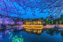 作为赏樱胜地,鼋头渚几乎很多人都列在目的地列表了。随着天气的好转,樱花绽放,夜樱也开始了,每天都有好