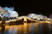 鼋头渚是无锡著名的旅游景点,若说它最值得去的季节一定是阳春三月了。作为中国三大赏樱胜地的鼋头渚,不仅