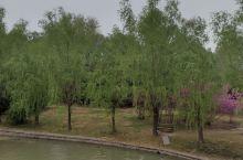濮阳濮上园,没有可玩性。适合周末带孩子玩一玩,只是普通的树林子,增加些稀有植物就好多了!