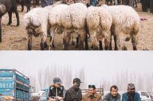 最土味的新疆打开方式——牛羊大巴扎  在周日早上十点,在喀什的314国道北郊荒地乡的大巴扎里,一场热