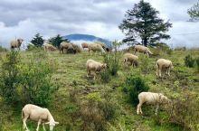 冶勒湖秀丽风光 遍地牛羊 随手拍的大片风景
