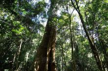 尖峰岭鸣凤谷,天然氧吧,观赏热带原始森林植物。