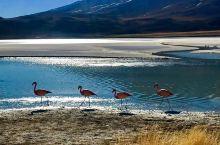 天空之镜——玻利维亚的美丽盐湖Hedionda湖  【来到Hedionda湖】  今年夏天我和朋友来