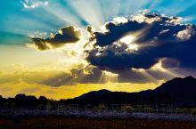 甘肃省,金昌市,永昌县,武当山 山脚下的一片花海还有美丽的夕阳!