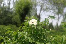 盛花盛景盛世