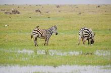 肯尼亚动物之:种类繁多、形态各异、悠闲自得的动物世界。