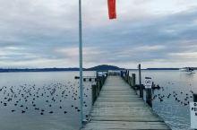 清晨迎着早霞来到罗托鲁瓦湖乘坐老式蒸汽轮船,吃着英式早餐游湖,湖面上各式水鸟与黑天鹅在嬉戏觅食水草。