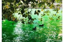 利马特河水呈现玉样的碧色,透明见底,一眼就看到鸭的脯在摇摆着划水,还有在岸边蹲着打盹儿的,肥嘟嘟懒洋