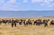 """一生必看的野生动物大迁徙东非大草原的""""天堂之渡""""  坦桑尼亚大草原被称为地球上大规模野生动物最后的栖"""