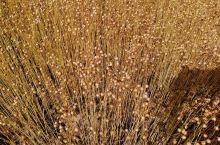 水草也是美景,身在其中,体验超棒,享受自然的馈赠,真好