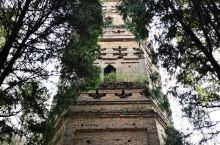台州天台国清寺,隋代古寺,不同于别家寺庙,墙壁是橙色墙壁很上照。难能可贵的是,国清寺多年来坚持免门票