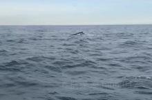 #冰岛#胡萨维克观鲸