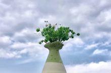 深秋出行,菊世无双 曾经上过央视新闻联播的菊花展 和南京农业大学合作的菊花试验基地,品种很多