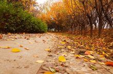 曲阜市植物园秋景。没有曲阜市植物园这个地点,请旅拍人员定位一下曲阜市植物园。西边是国辉游乐场,东边是