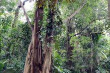 炎热潮湿之地,更有植物园该有的风貌。  比如,新加坡植物园。  那里是365天的郁郁葱葱,缤纷多彩,