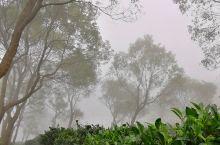 象窝山时常大雾弥漫。云浮新兴利用这个地理气候,劈野造田办茶场,并打造成生态园发展旅游业。走进雾海中的