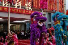 爬那么高,竟用一条竹竿撑狮尾。广西植保厂投产仪式有看头,六狮来贺喜!