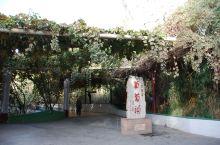 作为全国的知名景点~葡萄沟是吐鲁番市旅游的必去之处,目前的葡萄沟更像一个吃饭休闲的场所了。