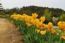 去的时候花期还算OK,所以还能拍到很多照片 花的种类很多,颜色很艳丽,非常适合拍照 里边还有一个类似