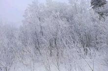 这就是传说中的雾松,长白山的温泉水蒸发的热气遇到冷空气直接凝结成白色的雾花,只有晴朗和极其寒冷的天才