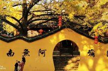 碧云天,枫林晚,十月江南艳阳欢。日照老树光灿灿,地铺鸭脚如金毯。八都十里换新颜,白果黄叶金银山。此时