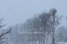 【景点攻略】旭山动物园可爱的企鹅,美瑛的大雪,富良野的银装素裹。希望的田野一片空白!我想要打滚,撒野