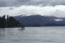 新西兰南岛自驾游(四) 20日第五天,早9点半出发去瓦纳卡湖,看见湖里有一颗孤独的树,也许比较特别引