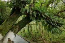 灵渠,古称秦凿渠、零渠、陡河、兴安运河、湘桂运河,是古代中国劳动人民创造的一项伟大工程,位于广西壮族
