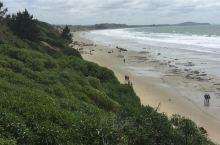 在摩拉基海滩上看见了很多海鸥。