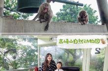 高崎山自然动物园去看猴群的日常生活 在温泉之乡别府,除了有温泉可以从早泡到晚,还有适合小朋友去玩耍的