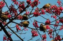 《来自灵山的问候:这树上有这么多鸟啊……》  我是孤独浪子,希望我的拍拍让您有所收获。 漫游神州31