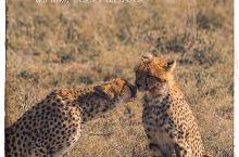 保护动物,就是保护我们的未来  正是因为野生动物的多样性,才使我们所在的美丽星球生机勃勃。 保护野生