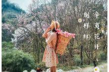 辛夷花开别样红  木末芙蓉花,山中发红萼。涧户寂无人,纷纷开且落。 -----王维《辛夷坞》  四川