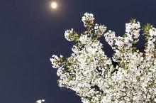 那年花开月正圆