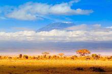 位于肯尼亚边境,临近云雾缭绕的非洲之巅——乞力马扎罗山,吸引着无数的游客前来观光。由于没有高大的植被