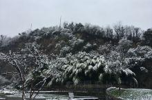 雪中的辰山难得一见,格外漂亮