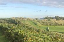 海边的高尔夫球场,在球场边还有一些蛇果一样的植物,红色的果子也很像山楂。远处的高尔夫草地绿油油的一片