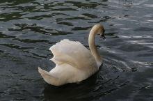东亚艺术博物馆后的人工湖,因为常年有天鹅在湖上游荡,也被我们称作科隆的天鹅湖。紧邻科隆大学,夏天大批