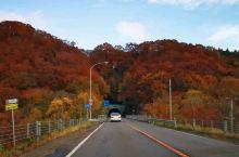 北海道·日本  北海道,深秋.秋色,无论跑到哪,都那么美!